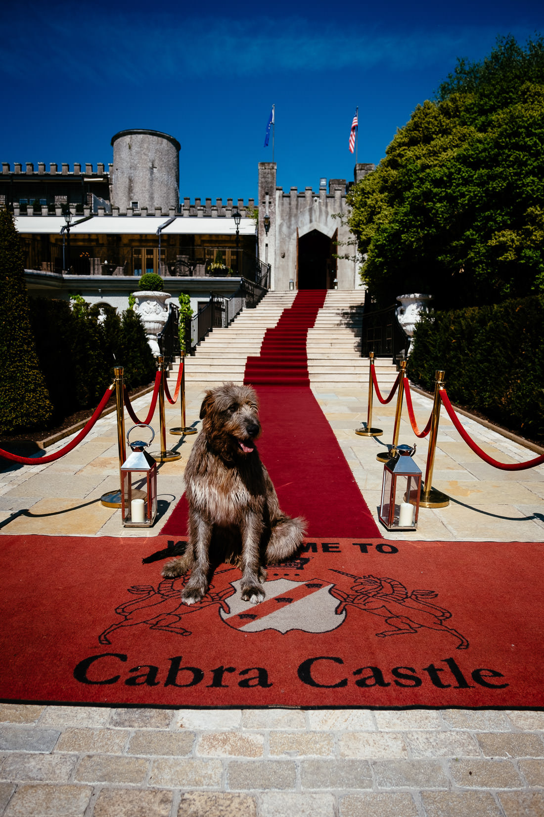 irish wolfhound sitting in front of cabra castle