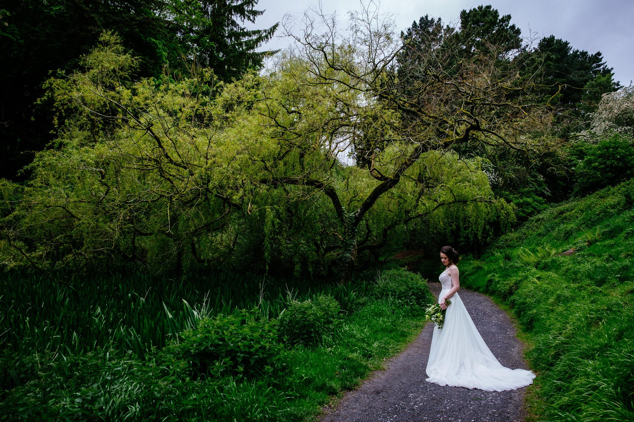 bride by a tree in phoenix park dublin